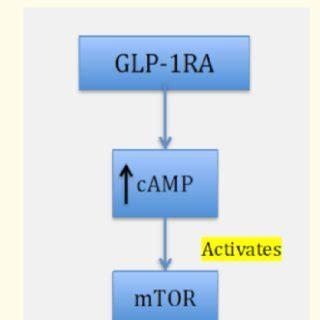 Literature review of type 1 diabetes mellitus